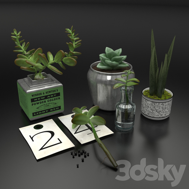 Decorative set with succulents