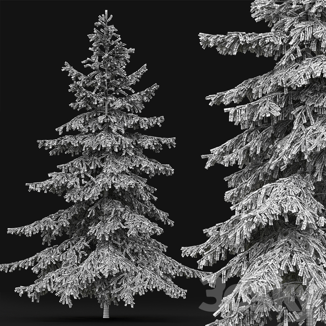 Spruce # 4