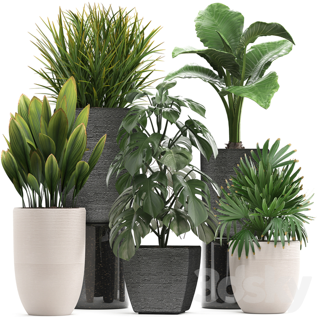 Plant collection 277.