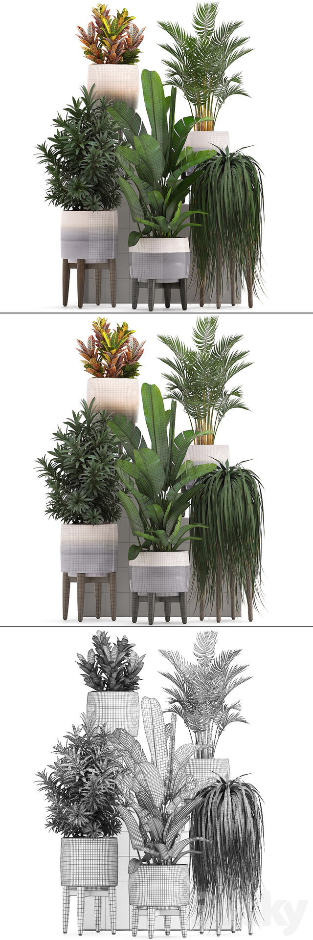 Plant collection 278.