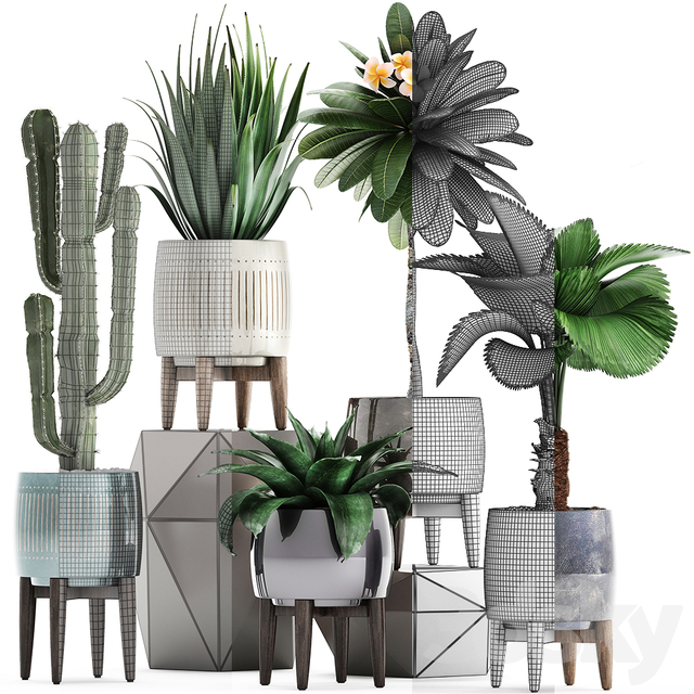 Plant collection 292.