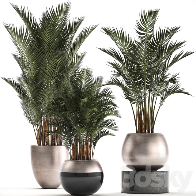 Plant collection 296.