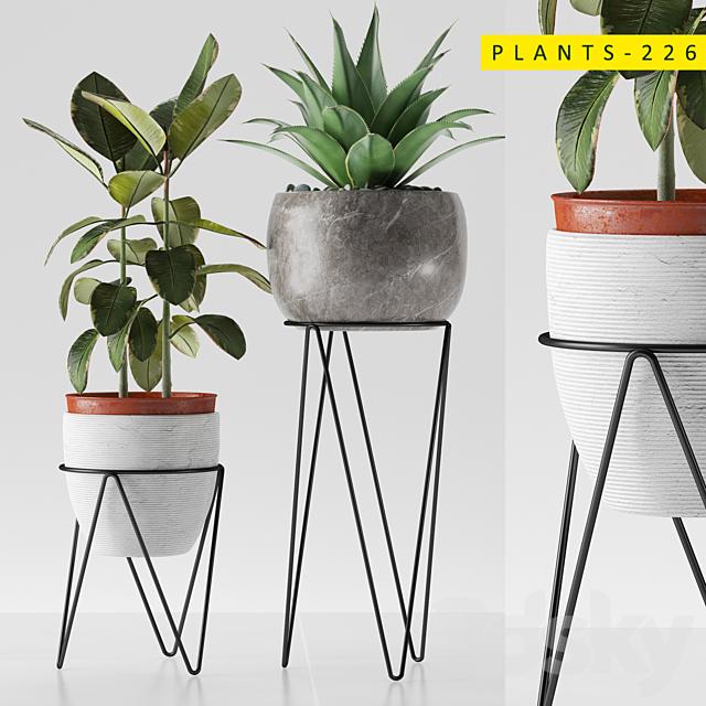 plants 226