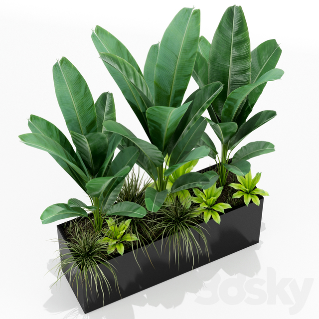 Plants collection 150