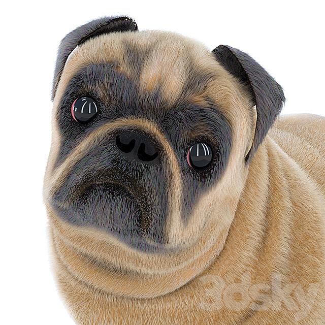 Pug 2
