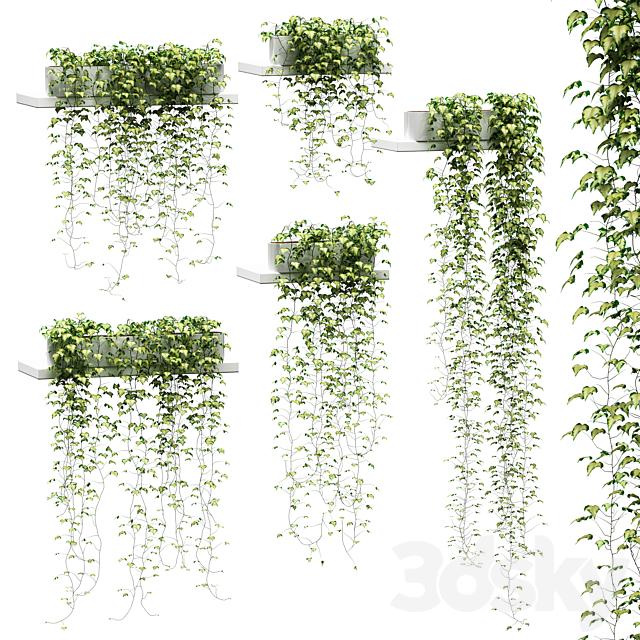 Ivy for shelves v2