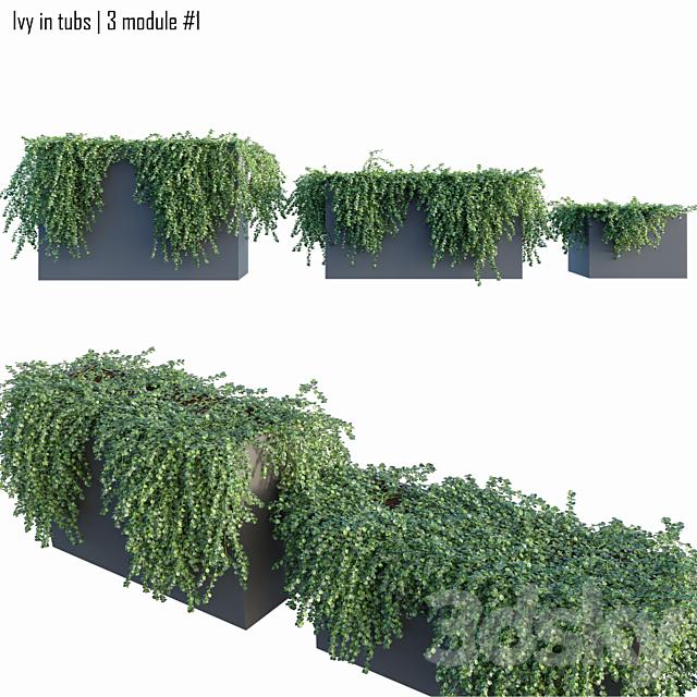 Ivy in tubs   3 module # 1
