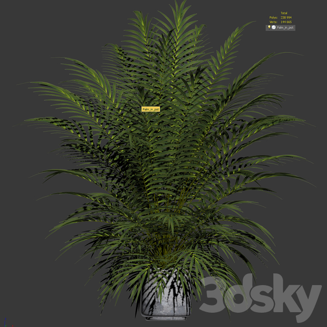 Palm tree in a pot