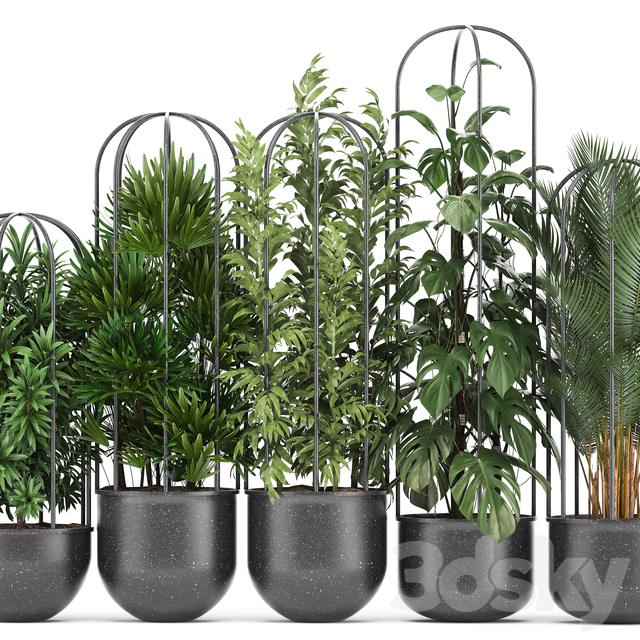Plant collection 329.