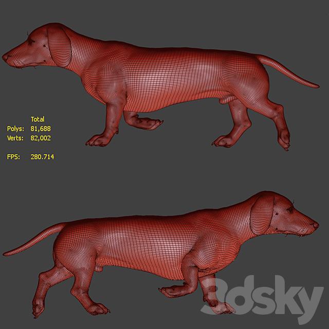 Dog_Dachshund