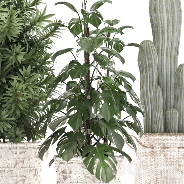 Plant Collection 336.