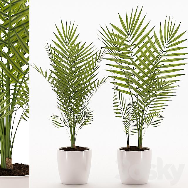 Plants 145