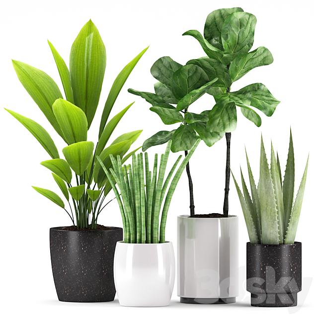 Plants 149