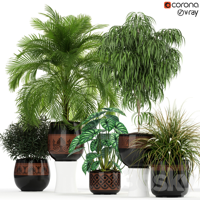 Plants collection 182