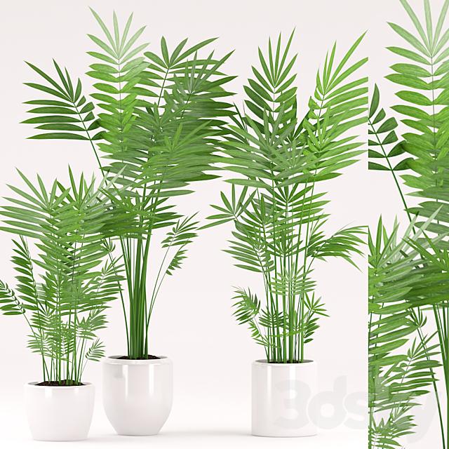 Plants 151