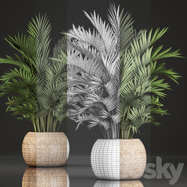 Collection of plants 346.