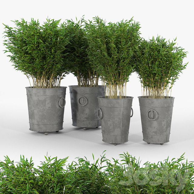 Ring planters