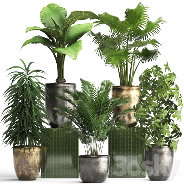 Plant collection 354