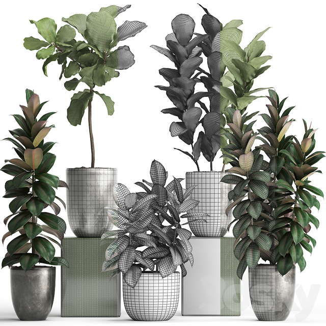 Plant collection 355