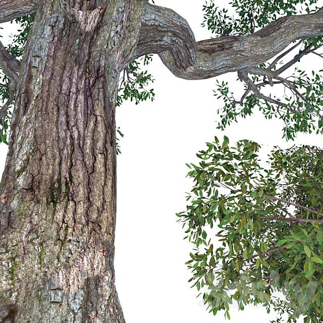 Broad-leaf tree