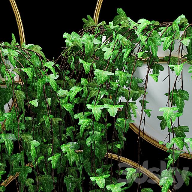 Bigler ivy