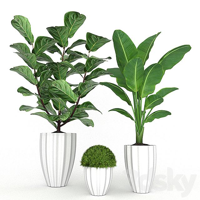 Plant Set 3