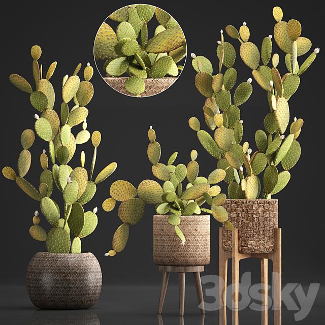 Plant Collection 375. Cactus set.