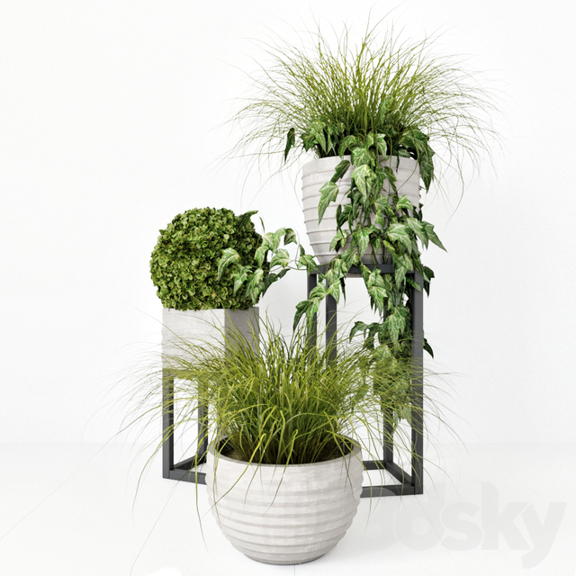 Plants outdoor set
