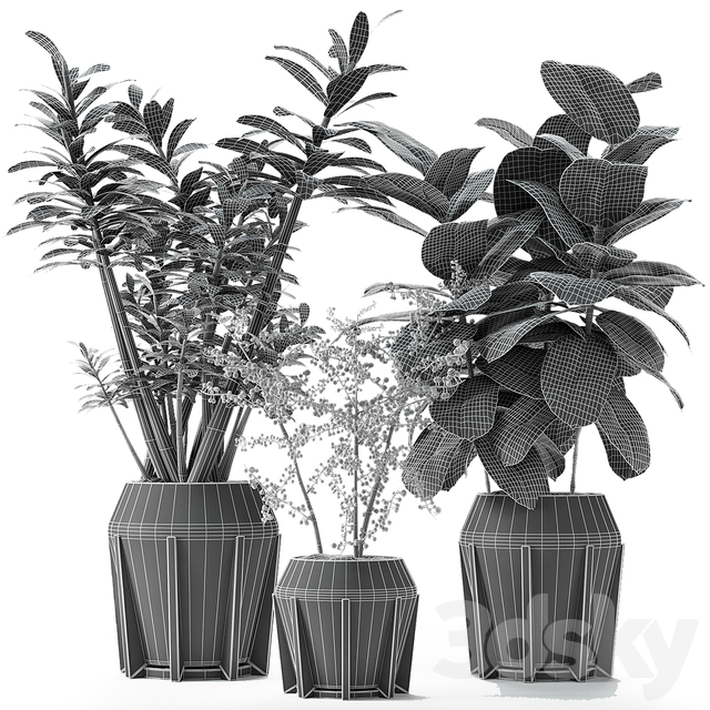 Collections Plants 02