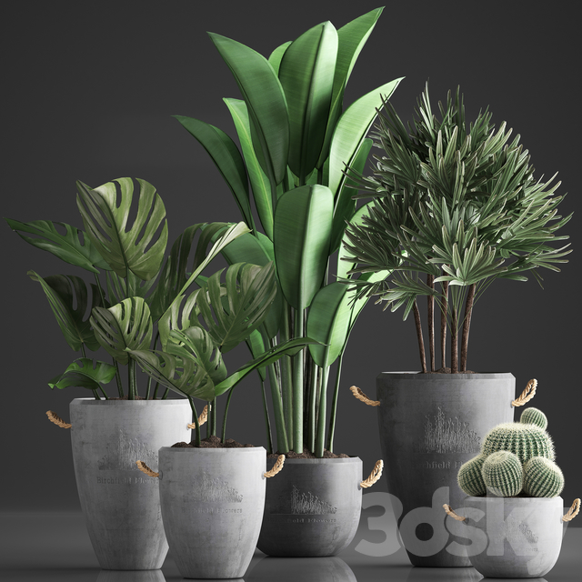 Plant Collection 378.