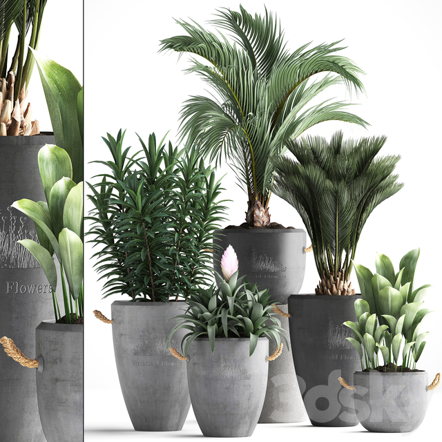 Plant Collection 379.
