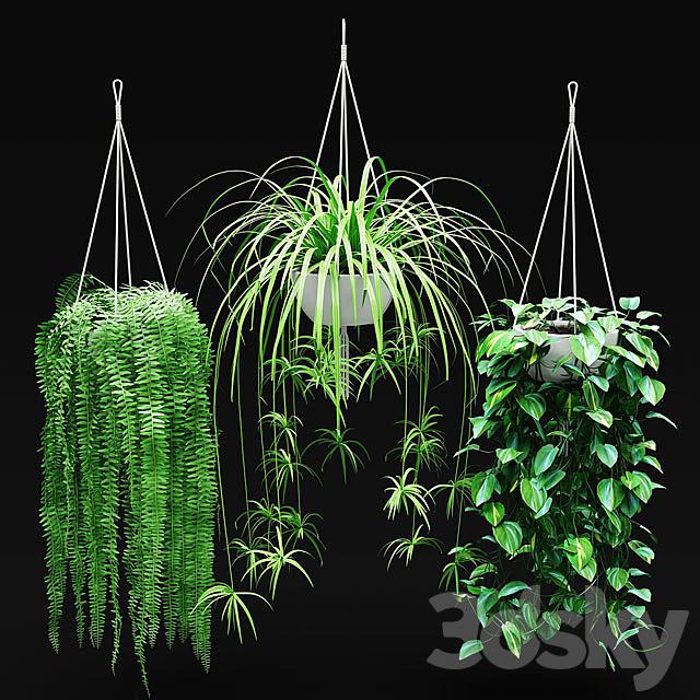 Set of hanging plants in hanging flower pots   Hanged Plants set in a hanging planters