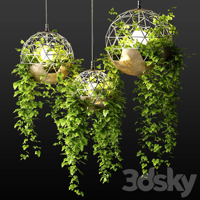 Lamps with hanging plants   The Lighters with a hanging plants