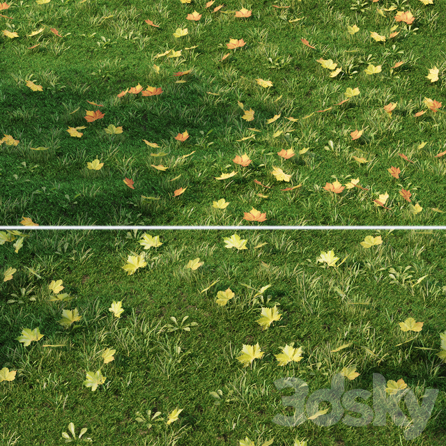 Lawn with fallen leaves