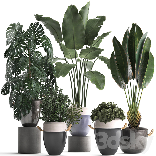 Plant Collection 396.