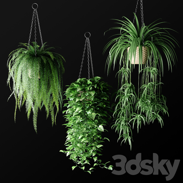 Plants in hanging wicker planters | Plants in Hanging Wicker Planters