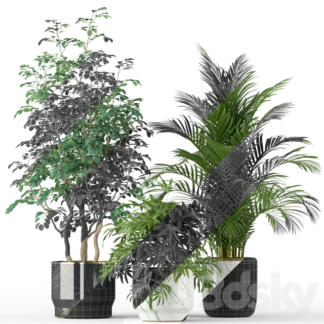 Plants collection 204