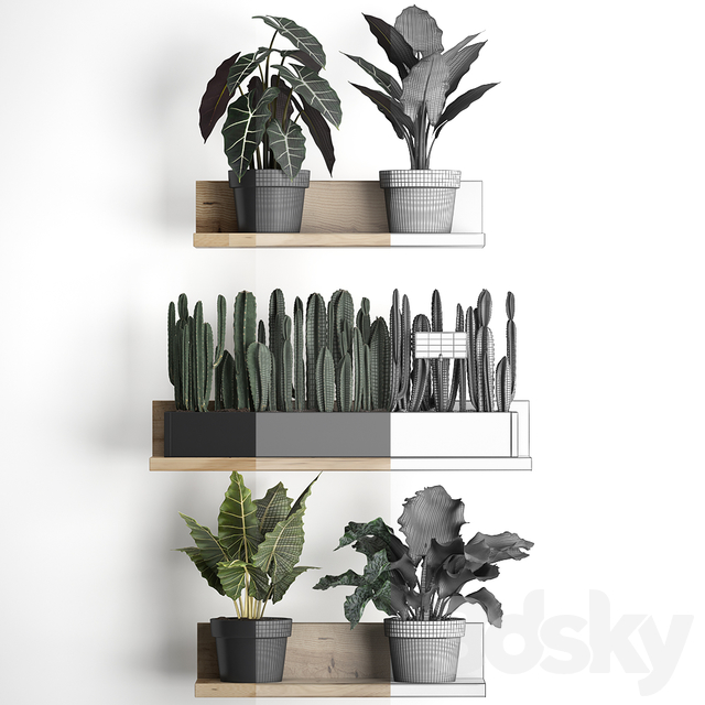 Plant Collection 399.