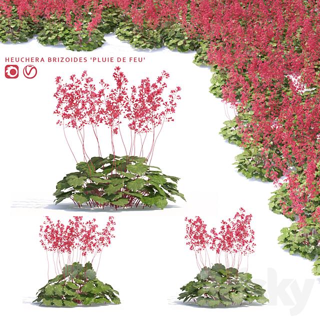 Heicher flowers | Heuchera Brizoides `Pluie de Feu`