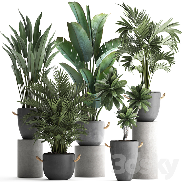 Plant Collection 402.