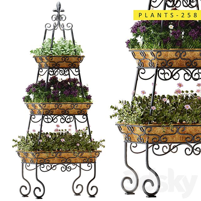 plants 258