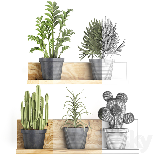 Collection of plants 410.