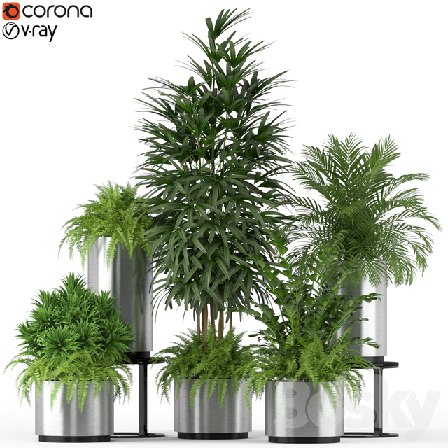 Plants collection 206