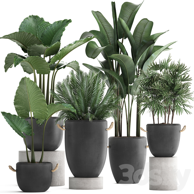 Plant Collection 415.