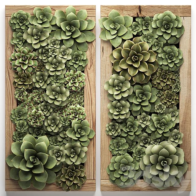 Vertical gardening. 53 echeveria