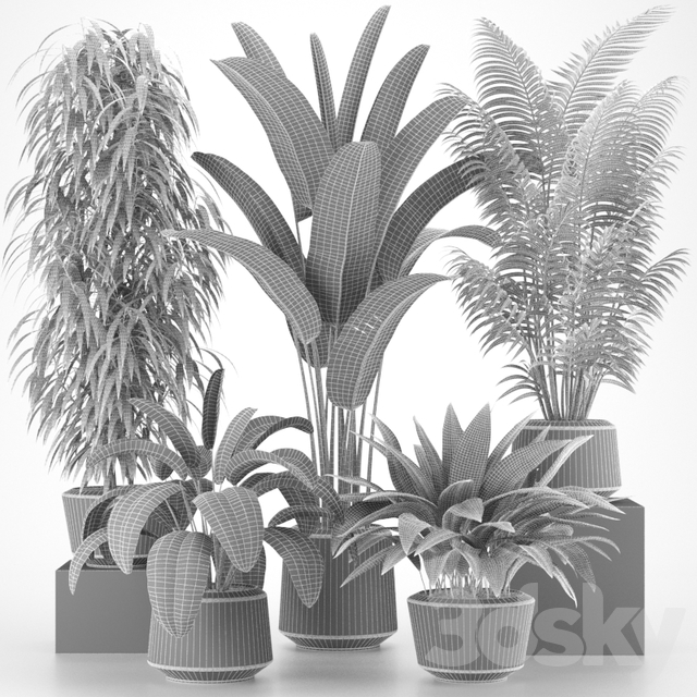 Plants collection 05