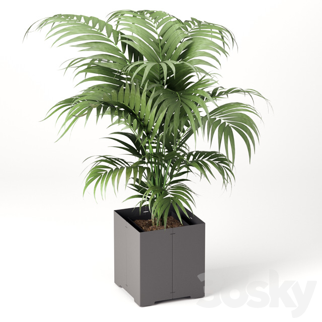 Palm tree in a pot (CAPE Collection)