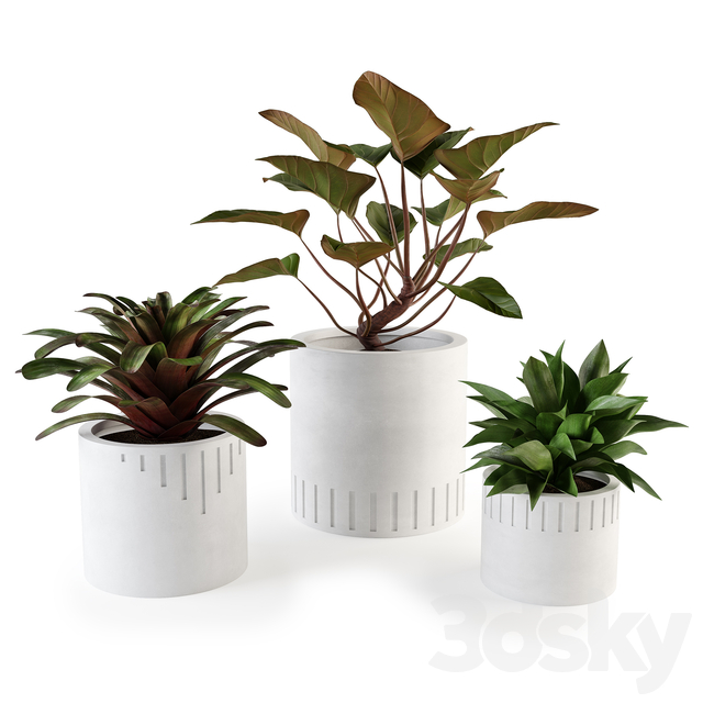 Set of plants w02