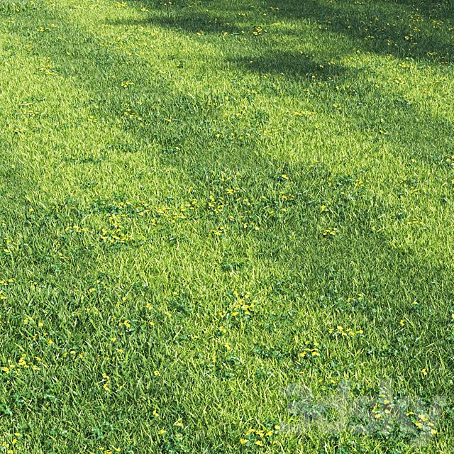 Grass england garden
