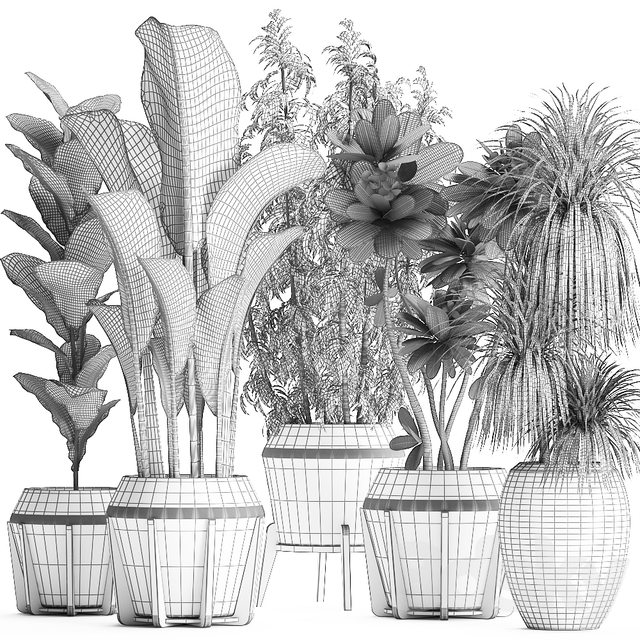 Plant Collection 425.